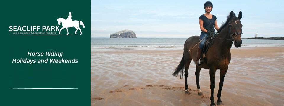 Horses Seacliff Beach